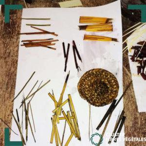 Formation en teinture naturelle de la fibre de palmier (7)